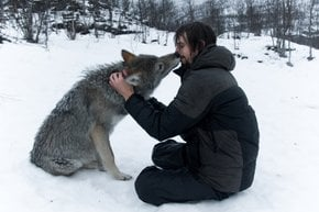 A Kiss from an Arctic Wolf