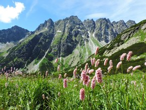 Wildflower Bloom in the High Tatras