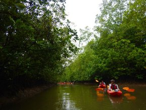 Kayak à travers une forêt de mangroves
