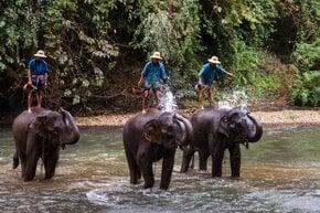 Lavar um elefante