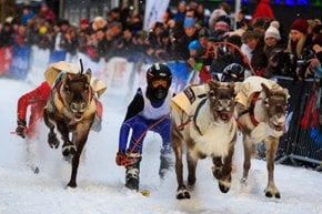 World Reindeer Racing Championships (Sami Week)