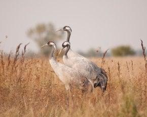 Hortobágy Birdwatching