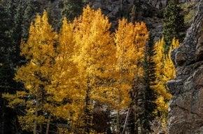 Colori di autunno in e intorno a Denver