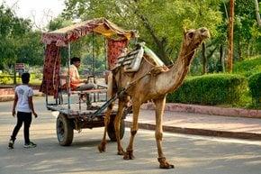 Visiting Paliwal Park