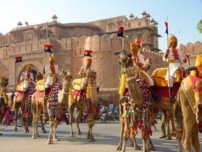 Festival de Camelos de Bikaner