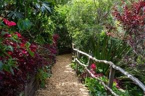 Le jardin secret de Wendy