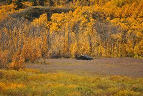 Colores de otoño de Montana