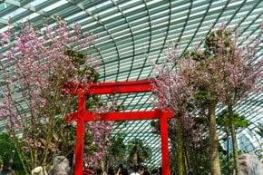 Sakura Matsuri Floral Display