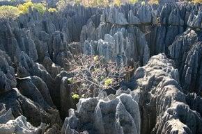 Foresta di pietra Tsingy de Bemaraha