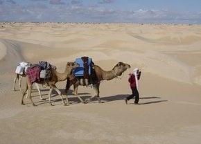 Saara Camel Trekking