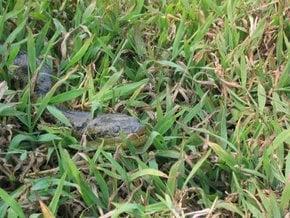 Suche nach Anaconda