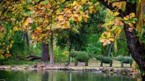 Fall Colors near Dallas