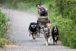 Summer Dog Sledding