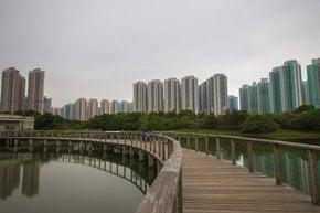 Migratory Birds at Hong Kong Wetland Park