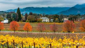 Colores de otoño de Napa Valley