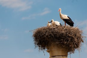 Storks of Volubilis