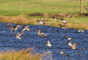 Birdwatching at Lauwersmeer