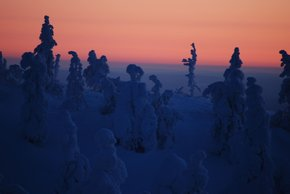 Kaamos: the Polar Night