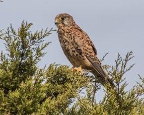 Sagres Birdwatching