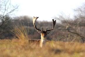 Deer at Zandvoort aan Zee