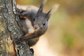 Beobachten Sie Eichhörnchen und Chipmunks