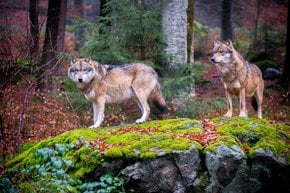 Spotting Wildlife at the National Park Bavarian Forest