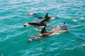 Encuentro de Delfines