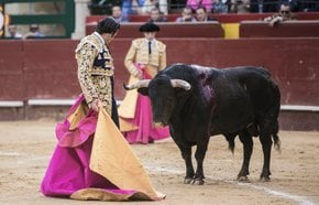 Corrida de Toros (Bullfighting)