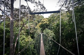 Canopy Walks en Malaisie péninsulaire