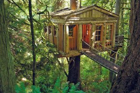 Point TreeHouse