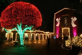 Das Grotte-Weihnachtsfest der Lichter