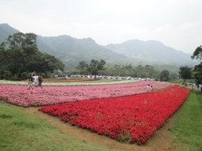 Ta Shee Blooming Oasis