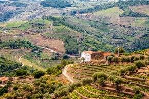 Die Entdeckung des Douro-Tals