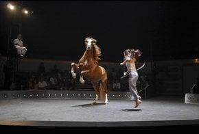 L'entre-Deux Biennales Circus Festival