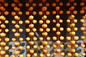 Persimmon Harvest and Gotgam Making