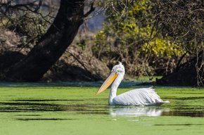 Sambal Fluss Safari