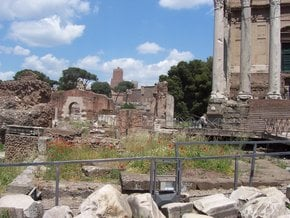 Poppies at the Roman Forum