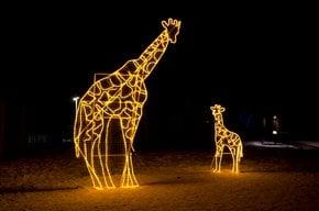 Luzes do Zoológico