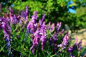 Flora of Sas-hegy