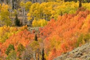 Colores de otoño de Wyoming