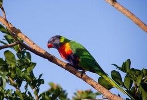 Drunken Parrot Season