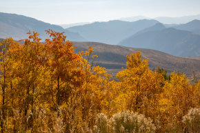 Colores de otoño de Yellowstone
