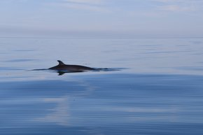 Dolphin & Whale Watching in Wales
