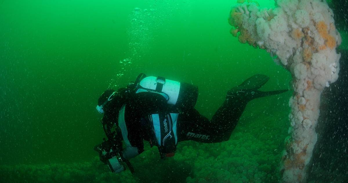 Diving in Wales - Best Time