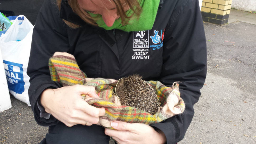 Best time to see Hedgehog Rescue in Wales