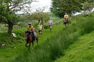 Man v Horse Marathon