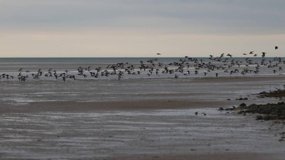 Seabirds in Glan y Môr Elias in Wales - Best Time