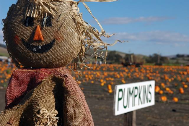 Autumn Pumpkin Patch in Washington, D.C. - Best Season