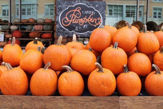 Autumn Pumpkin Patch in Washington, D.C. - Best Time