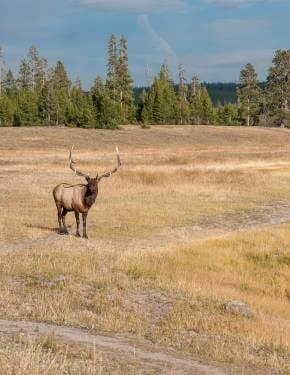 Melhor altura para visitar Wyoming